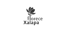 presentan, patrocinadores, florece xalapa, docsxalapa, 2019